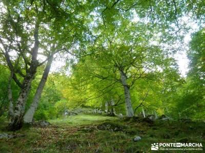Hayedos Parque Natural de Redes;excursiones madrid fines de semana rio jarama